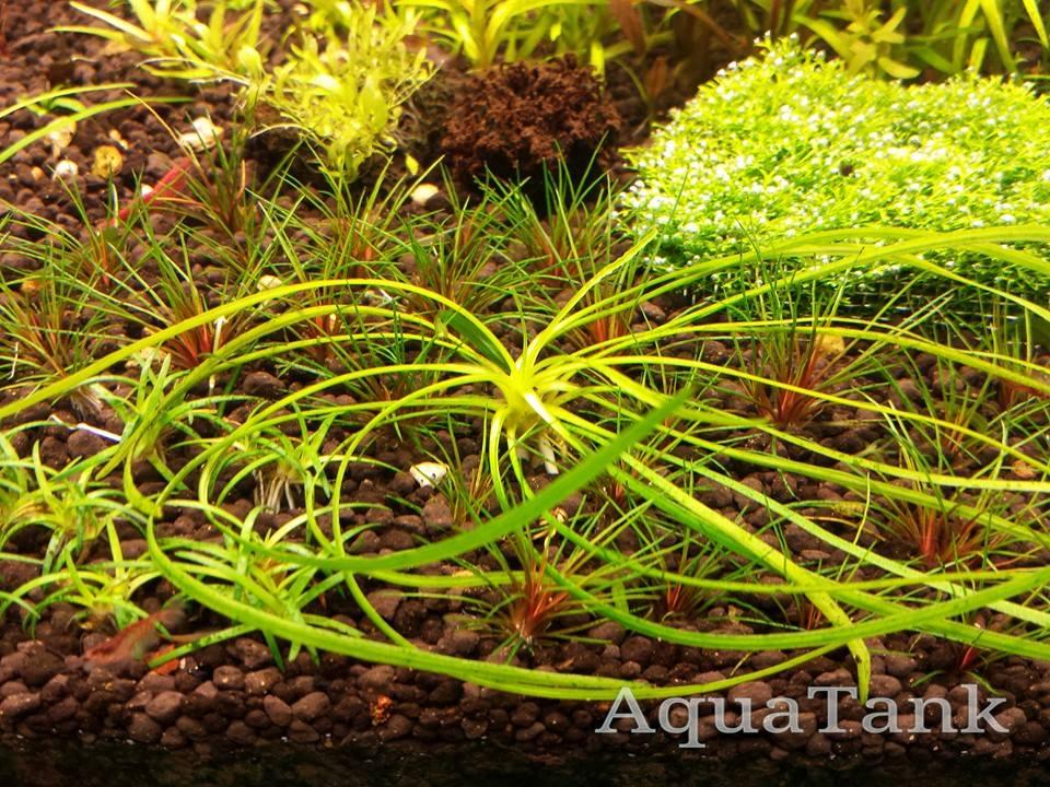Aquascaping & Plants. on Pinterest Aquascaping, Planted Aquarium and ...