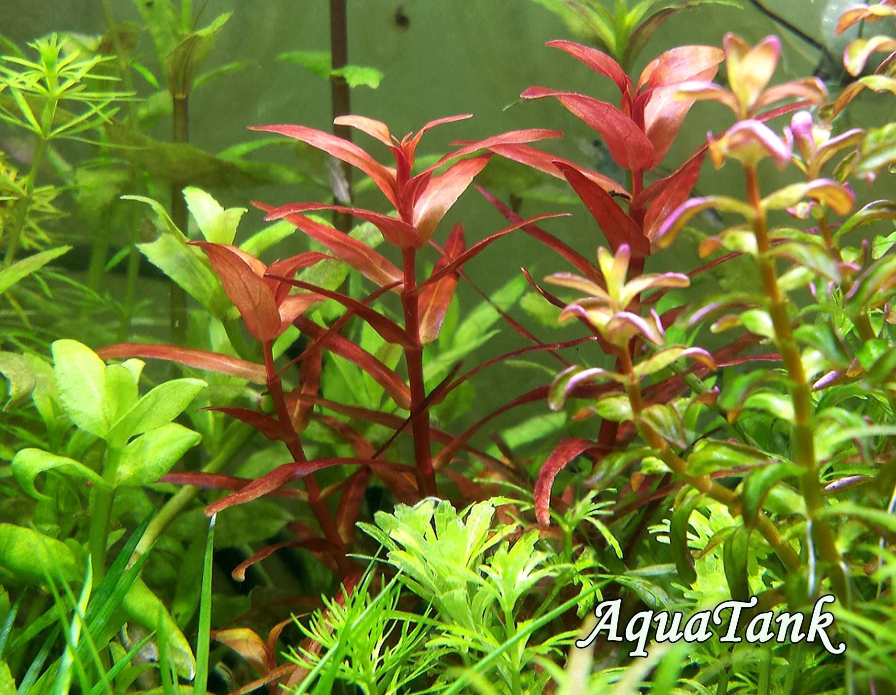 Plants In Aquarium
