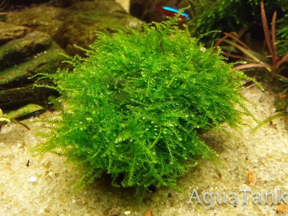 Aquarium Plants Related Keywords & Suggestions - Aquarium Plants Long ...